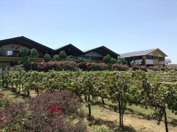 vin indien, nashik, circuit inde, India tour, indian wine