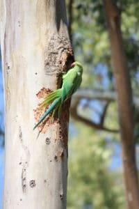 Parrots in Burkha