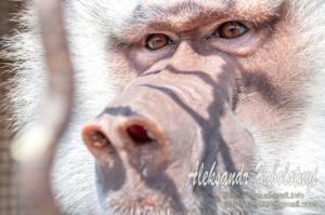 фотографії тварин, мавпа