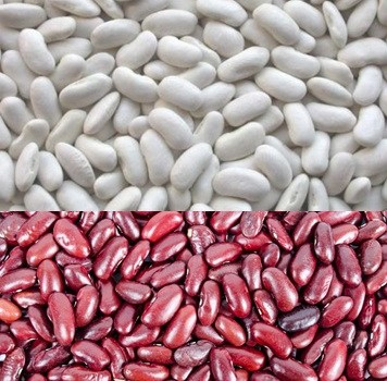 العناصر الغذائية في الفاصوليا المطهوّة, السعرات الحرارية - الكربوهيدرات - العناصر الغذائية في الفاصوليا المطهوّة