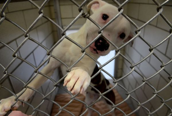 Mystery canine disease kills 2 dogs as Mobile animal shelter temporarily closes
