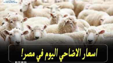 اسعار الاضاحي في مصر