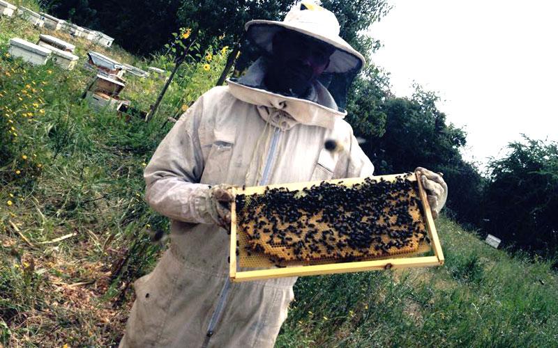 العسل الطبيعي … نموذج لعلاقة انتاجية بين الإنسان والحشرات والطبيعة