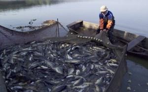 تربية الأسماك بطنجة.. قطاع واعد بأكبر ضيعة بالمغرب