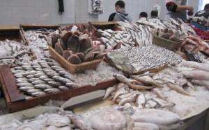 مندوبية التخطيط: زيادة في أسعار السمك وبني ملال الأغلى