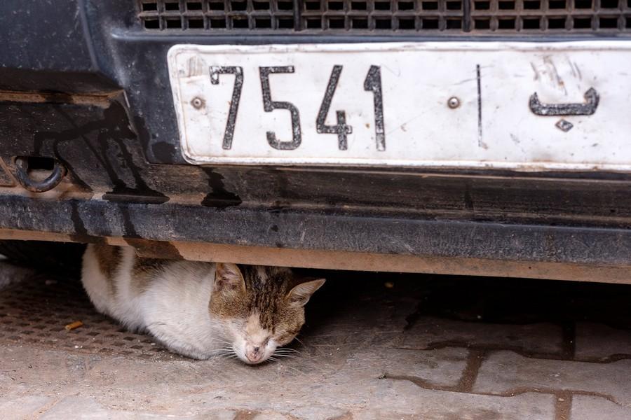 أعطوه مُرهماً واتهموه بالوسواس.. وفاة مغربي بريطاني الجنسية بسبب عضة قطّ مسعور