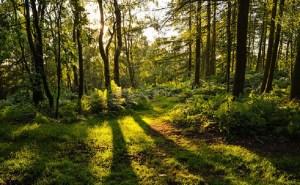 وزارة الفلاحة تبرمج 600 ألف هكتار لتشجير الغابات بحلول عام 2030