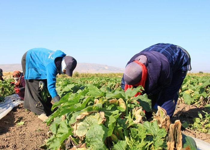 مسؤولة أممية: النساء القرويات يضطلعن بدور هام في الفلاحة والأمن الغذائي