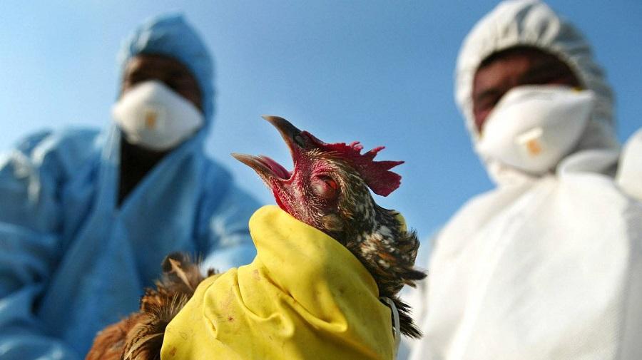تسجيل أول إصابة بشرية بسلالة جديدة من إنفلونزا الطيور في الصين