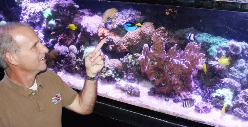 Bill Trufant points to a fish in a saltwater aquarium at B&B Pet Stop. Fish were his first love, and he majored in marine biology at Spring Hill College. (Robert DeWitt/Alabama NewsCenter)