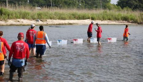 Volunteers from the Alabama Power Service Organization and the Nature Conservancy teamed up for a reef restoration project in Mobile Bay at Helen Wood Park. (Mike Kittrell / Alabama NewsCenter)