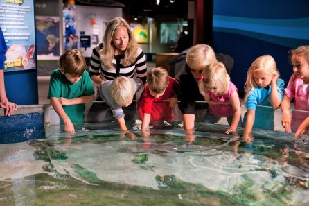 The touchtank at McWane puts kids together with aquatic life. (contributed)