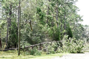 Downed trees lined many roads in southeast and eastern areas of the state. (Wynter Byrd/Alabama NewsCenter)