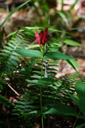 Turkey Creek Nature Preserve. (Erin Harney / Alabama NewsCenter)