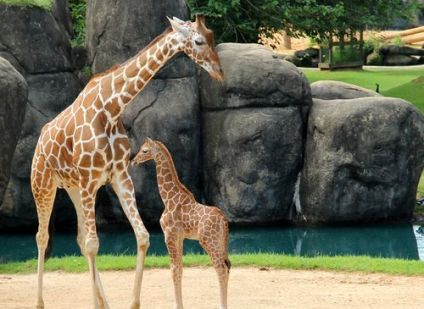 The Montgomery Zoo is ready for Earth Day. (Contributed)
