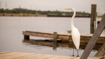 Conservation projects being funded by the Fish and Wildlife Foundation will support wildlife habitat along Alabama's coastline. (Dennis Washington / Alabama NewsCenter)