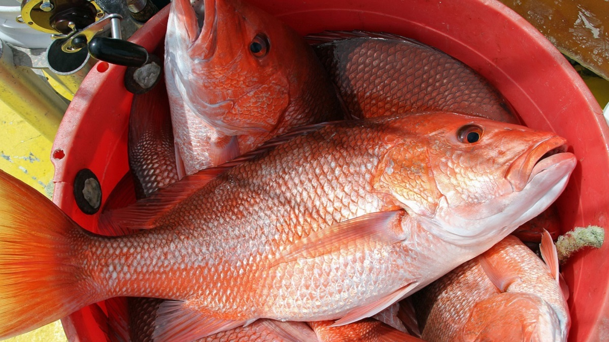 Fishing for red snapper in Alabama waters continuing on weekends until quota met