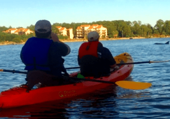 Dolphin Sunset Kayak Tour