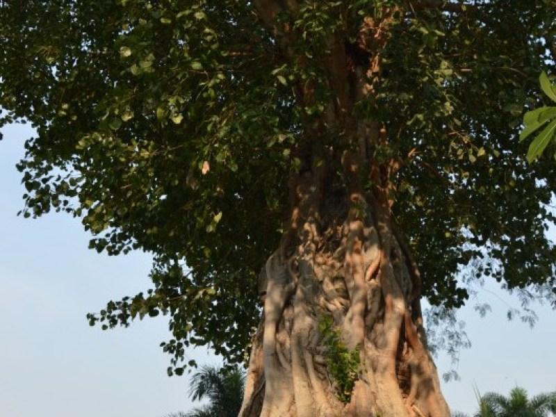 Ayutthaya - Wat  Na Phra Men