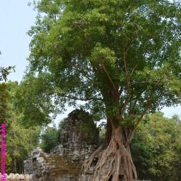Art. 42 : Siem Reap et les temples d'Angkor (épisode 2)
