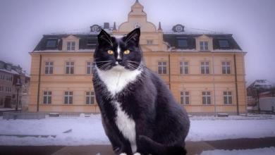 Photo of طرائف العالم.. «قط» يترشح لمنصب عمدة في إحدى المدن الألمانية