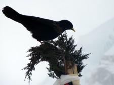 Puja Bird