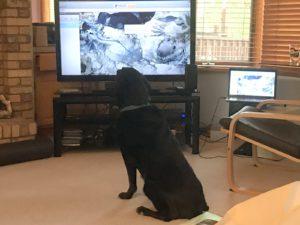Jake the Wonder Dog watching Jim