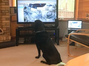 Jake the Wonder Dog watching Jim