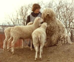 Dali & Lambs