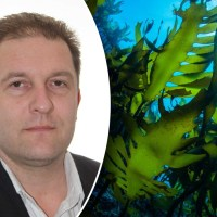 Åländsk affärsman dömdes för grov penningtvätt i storsvindel med sjögräs