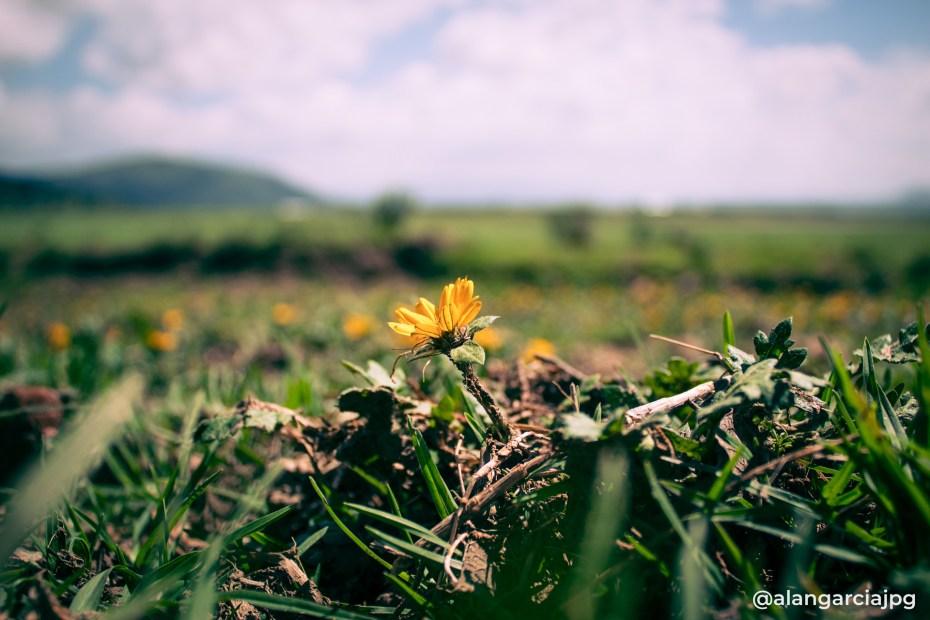 Pequeña flor, un gran recuerdo