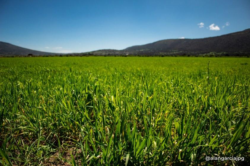 Verde paisaje en Apan, Hidalgo