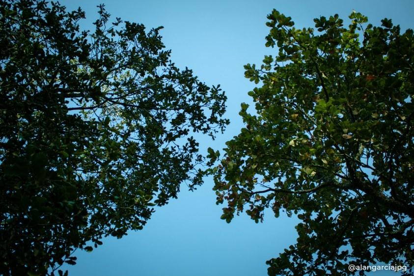 Mira hacia arriba, hay más que cielo