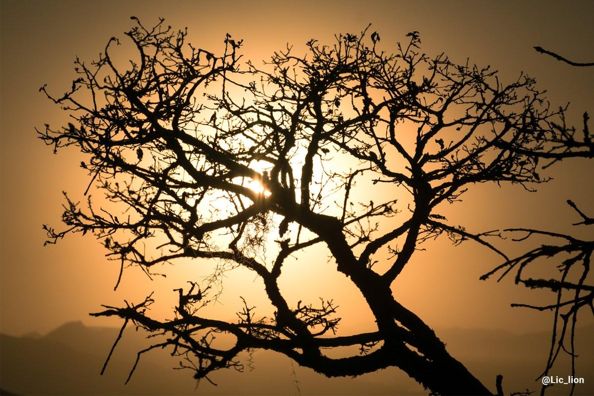Contraluz de las ramas de un árbol.