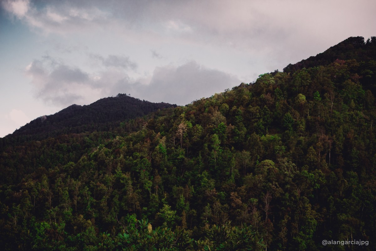 Montañas tupidas de árboles en San Andrés Tianguistengo, Actopan, Hidalgo.