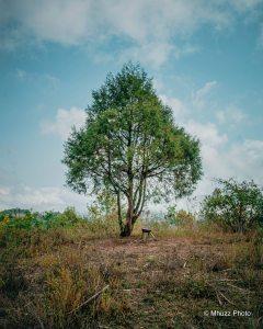 Árbol de más de 20 de años de vida en plena naturaleza.