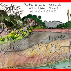 24_Petaluma_Marsh_Blackpoint