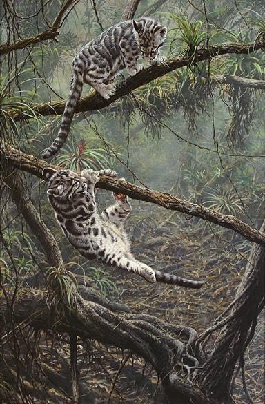 Original Paintings Of Bobcats Alan M Hunt