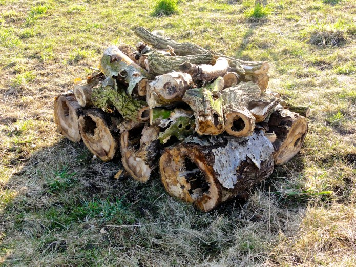 The new log pile is already full of insects and will provide a haven for mice, hedgehogs, frogs and other small mammals.