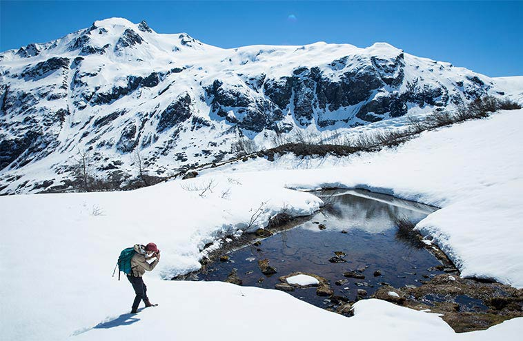 Harding Icefield Trail To Exit Glacier On The Seward Must