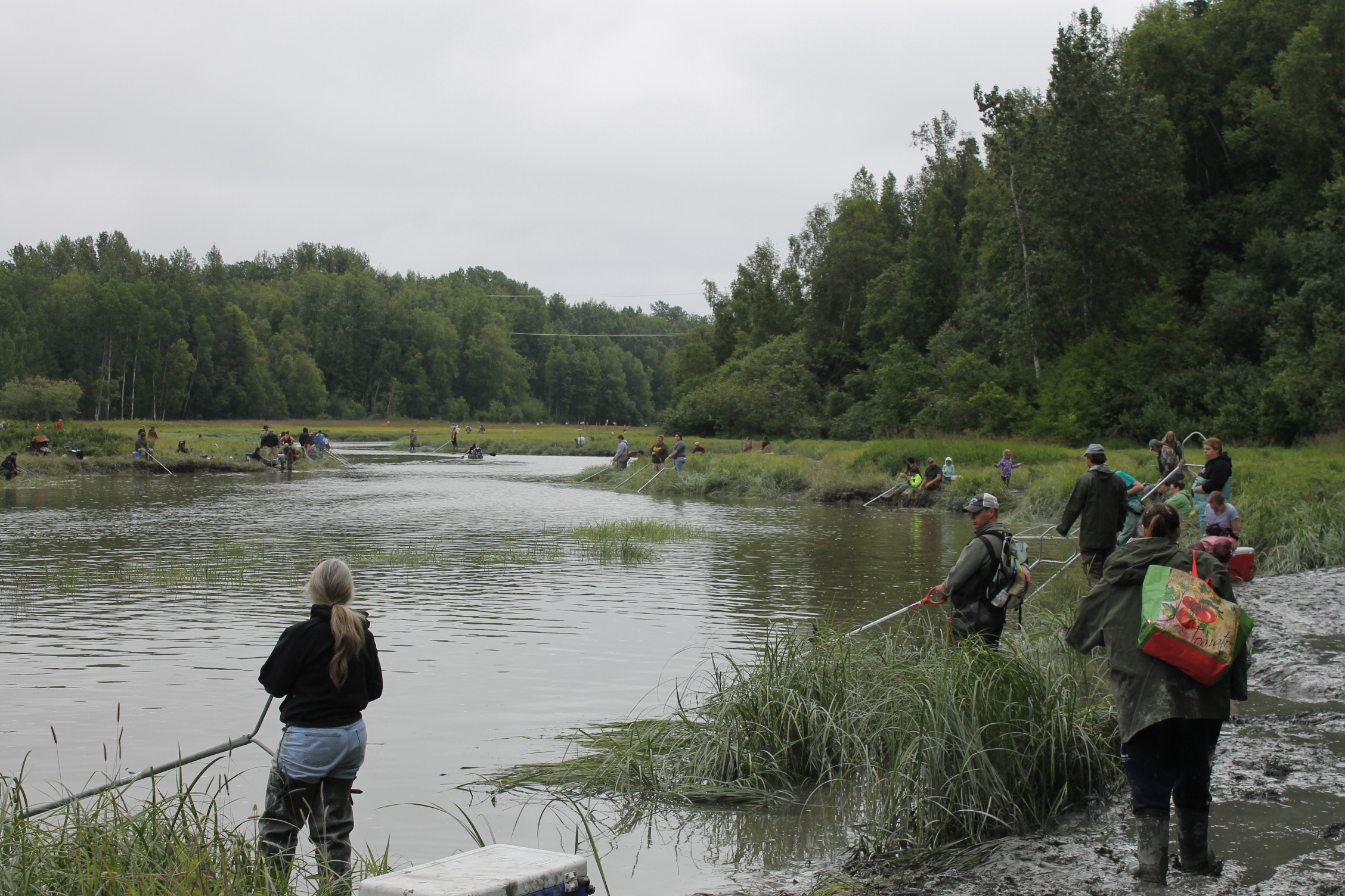 Fish Creek Opens For Dipnetting Drawing Crowds