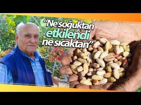 Olmaz Dediler Ama O Eskişehir'de Antep Fıstığı Yetiştirdi!