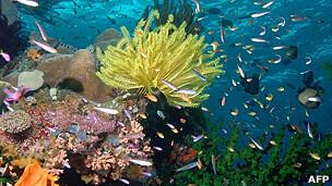 Güneş ışınlarından korunmanın sırrı mercanlarda mı gizli?