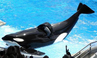 Balinalar davayı kaybetti