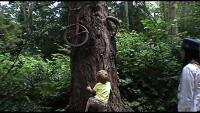 Bisiklet yutan ağacın önünde hayat dersi!