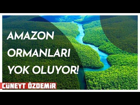 AMAZON YOK OLUYOR!