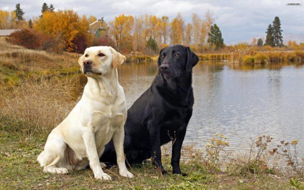 الهروب من الكلاب في المنام