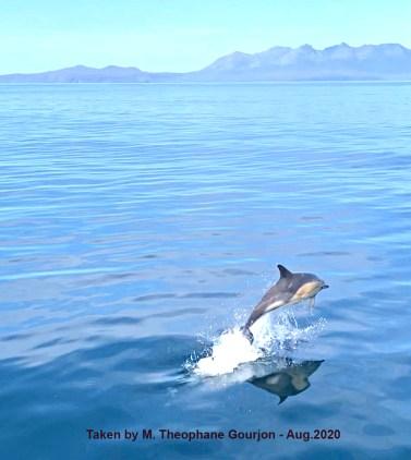 gourjon dolphin