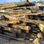Bistra: Le-au confiscat 30,52 de metri cubi de material lemnos, în urma unui control