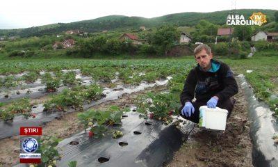 cultivator-capsuni